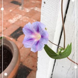 お花の問屋さん Wholesale Flowers❤︎多肉植物とガーデニング