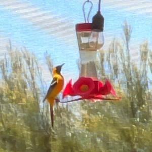 庭に遊びに来た珍しい鳥♡フラレッスン
