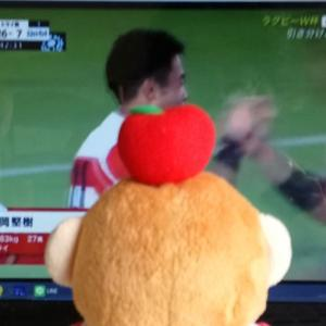 ワールドカップラグビー2019日本大会・準々決勝へ向けて