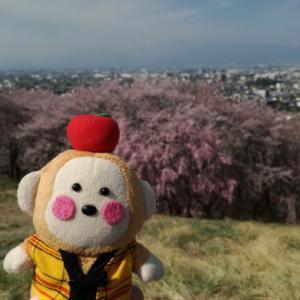 2019年4月 弘法山モーニング登山