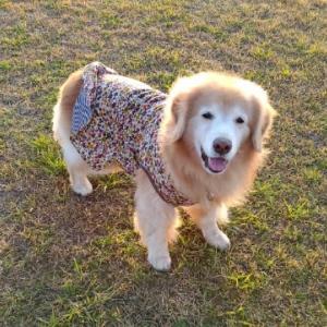 手づくり犬服
