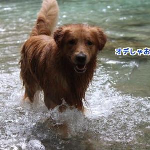 8月の川デート 〜那須&私の近況(五十肩)