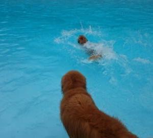 懲りずにプール