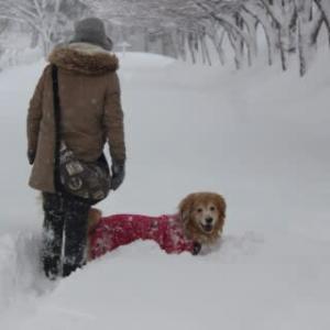 こんちゃんと雪遊び
