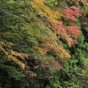 矢ノ川峠の紅葉風景(その3)(撮影:11月27日)