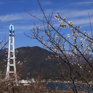 向井の梅園散策(その2)(撮影:2月4日)