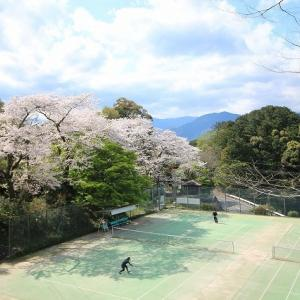 大曾根公園の桜満開(その2)(撮影:4月2日)