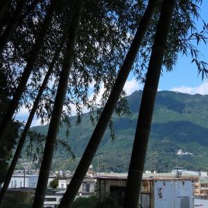 桂山竹林風景(撮影:9月15日)