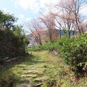 玄工山桜一巡散歩(その2)(撮影:3月24日)
