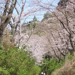 玄工山の桜一巡り散歩(その4)(撮影:3月24日)