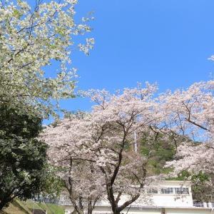始神さくら広場の景観(その3)(撮影:3月26日)