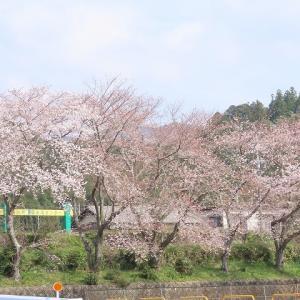 大台町さくら巡り(その1)(撮影:3月27日)