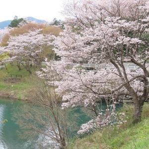 大台町さくら巡り(その4)(撮影:3月27日)