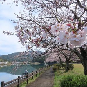 片上湖畔を散歩(撮影:3月29日)