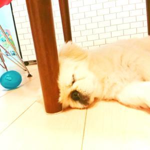 愛犬(*^^*)