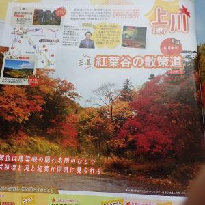 キレイな紅葉を撮りたい。上川に・・・。味豚!!