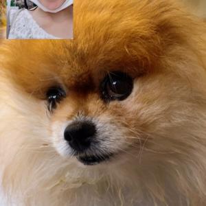 リモートで愛犬と写真撮る娘