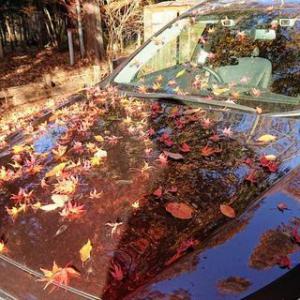 我が家の紅葉もまた来年