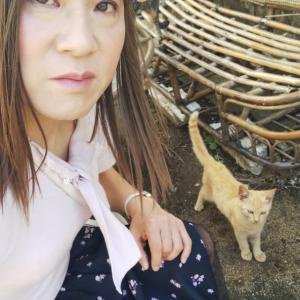 いちごは相島で猫ちゃんとふれあいを楽しみました