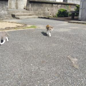 いちごと仲良しな相島の猫ちゃん