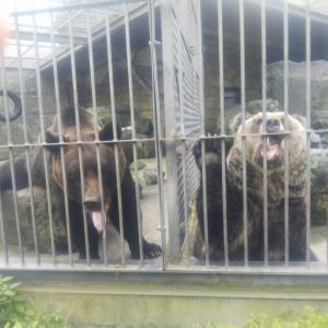 いちごとハナちゃんは熊さんと仲良しです