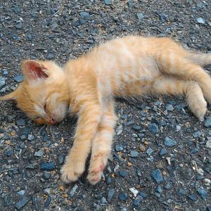 いちごが成長を楽しみにしている相島の子猫ちゃん