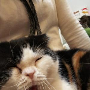 いちごと仲良しな猫ちゃんコハルちゃん卒業おめでとう