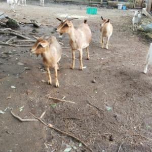 いちごはカドリー・ドミニオンで心配していた沢山の動物さんに会えました