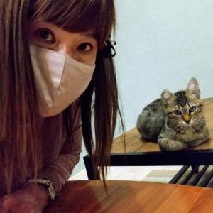 いちごは猫カフェかごにゃんに行きました