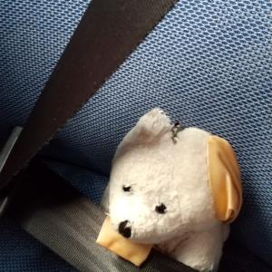 いちごとハナちゃんのスペシャル旅行4日目鹿児島のおはなし