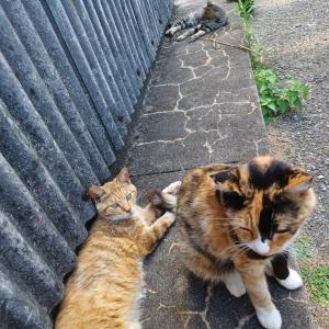 いちごは久しぶりに相島の猫ちゃんとふれあいを楽しみました