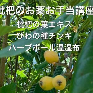 琵琶の葉エキス用の琵琶の葉ご準備します!