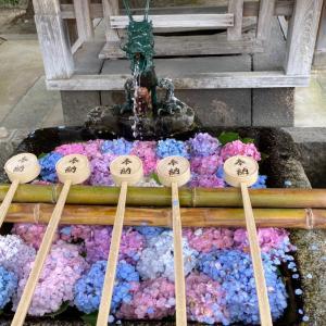 紫陽花が有名な藤森神社と、伊藤九衛門の抹茶パフェ。