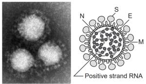 新型コロナウイルス(ncov19)
