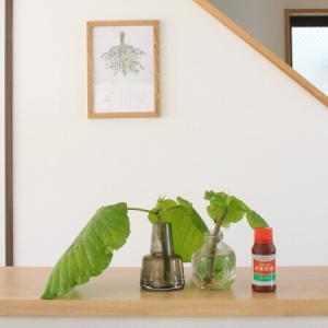 すぐ枯らしてしまう私が増やせた観葉植物、植え替えに最適な時期は?