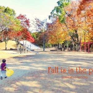 この公園にも秋がきた
