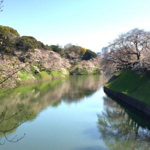 東京の定番のお花見スポット【千鳥ヶ淵の桜】
