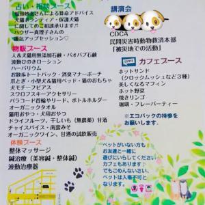 築地での犬猫チャリティーイベント、行きませんか?!