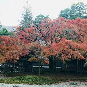 雷山観音の紅葉