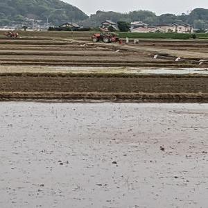 週末は田植えの水が一斉に張られました。