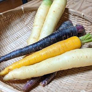 紫、白、黄色のカラフル人参
