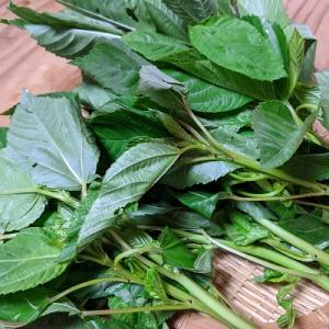 ネバネバ夏野菜のモロヘイヤ