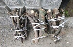 庭木の剪定ー柿②