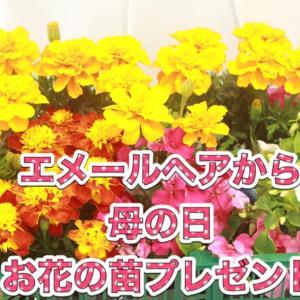 母の日にお花の苗をプレゼント致します。
