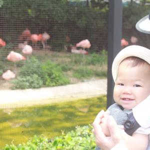 キリンさんに会いに天王寺動物園へやってきました。