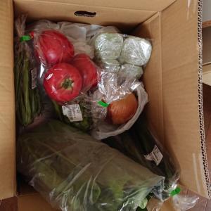 お野菜、いっぱい