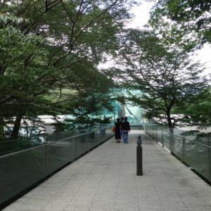 箱根 ポーラ美術館の森の遊歩道