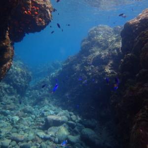 ヒリゾ浜で出会える珍しい魚達