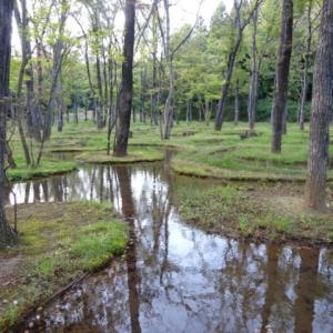 アートビオトープ那須 水庭 建築家・石上純也氏がデザインした160個の池と318本の樹木