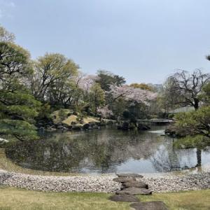 駿府城公園 紅葉山庭園のお花見